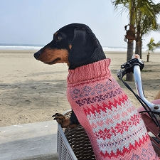 Fall Medley Pink Alpaca Dog Sweater