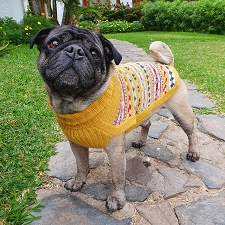 Little Miss Sunshine Alpaca Dog Sweater