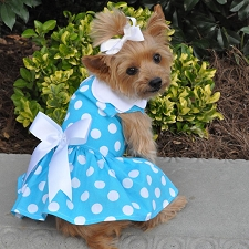 Blue Polka Dot Dog Dress