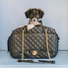 Vanderpump Quilted Classic Luxury Pet Carrier- Black