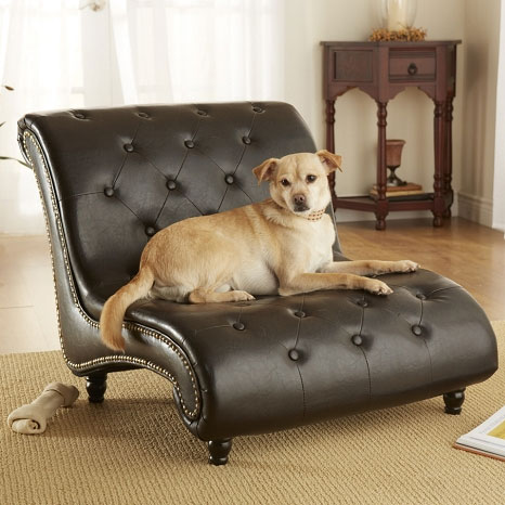 Tufted Trevi Doggy Chaise Lounger Fancy Dog Beds At