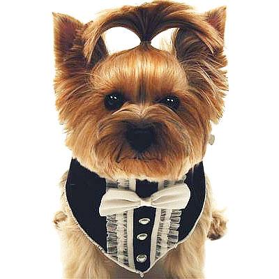 Tuxedo Dog Scarf Designer Dog Accessories And Cute