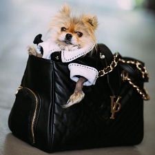 Vanderpump Monogramme Chain Pet Carrier- Black
