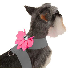 Water Lily Two-Tone Dog Harness by Susan Lanci- Platinum and Perfect Pink