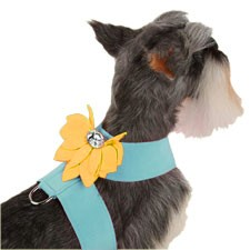 Water Lily Two-Tone Dog Harness by Susan Lanci- Tiffy Blue and Sunshine