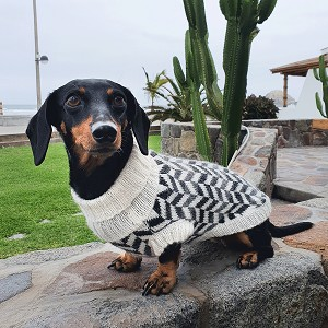Herringbone Alpaca Dog Sweater