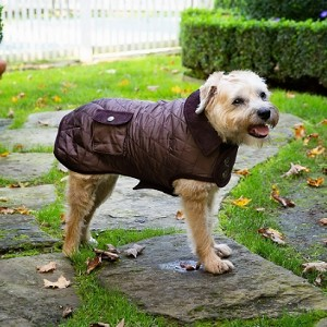 Barn Dog Coat- Chocolate