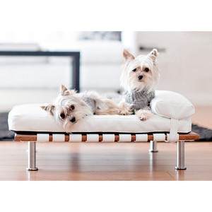 Elegant Ivy Small Modern Dog Day Bed