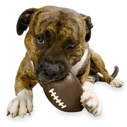 Football Orbee-Tuff Dog Toy