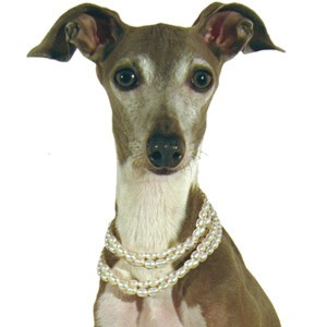 Genuine Freshwater Pearl Dog Necklace - Natural