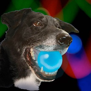 Meteorlight LED Glowing Dog Ball Toy - Four Colors