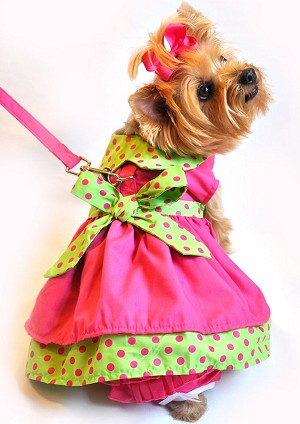 Rasberry Lime Polka Dot Dog Dress