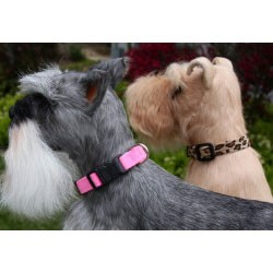 Quick-Release Ultrasuede Dog Collar by Susan Lanci - 30 Colors